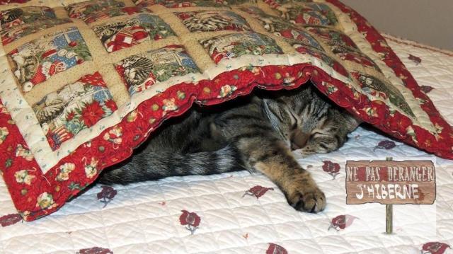 jessy-hiberne